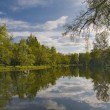 Clouds and trees reflection in pond — Stock Photo