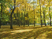 Autumn park with maples — Stock Photo