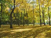 Parque de otoño con arces — Foto de Stock