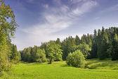 Green summer trees — Stock Photo