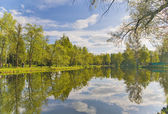 Trees and clouds reflection in pond — Stock Photo