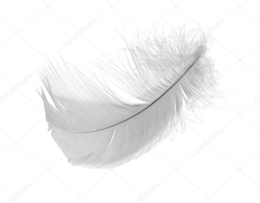 White chicken feather isolated on white background — Stock Photo #6260169