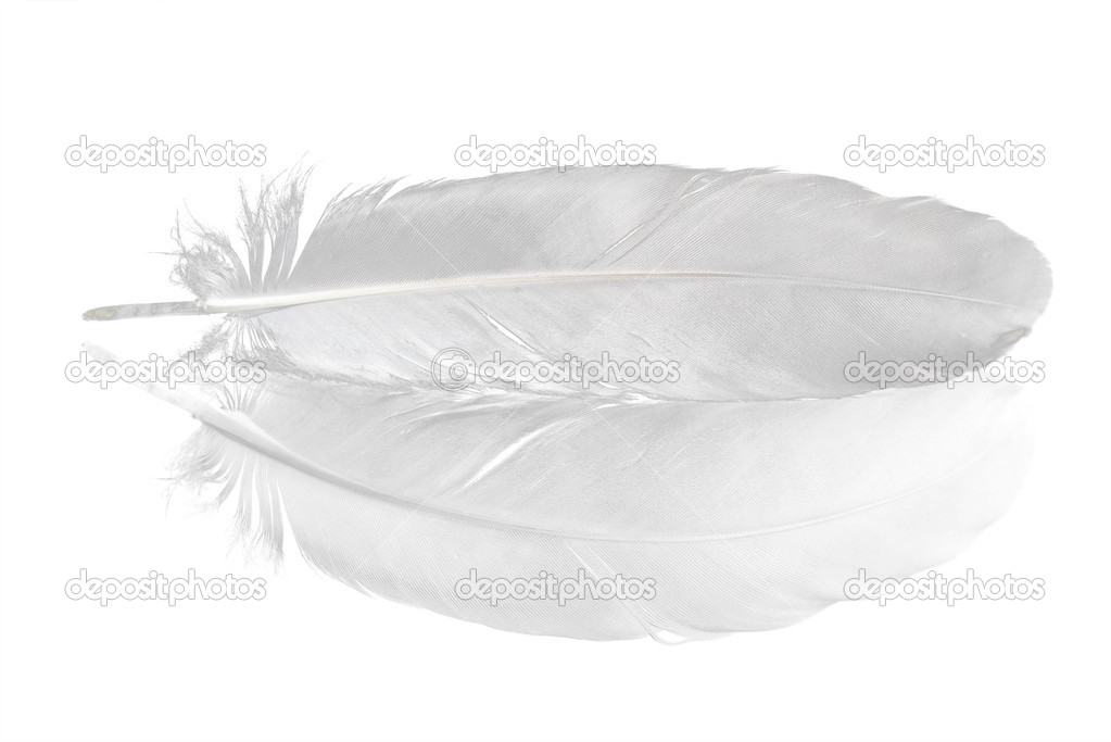 Pigeon feather and its reflection isolated on white background — Stock Photo #6260172