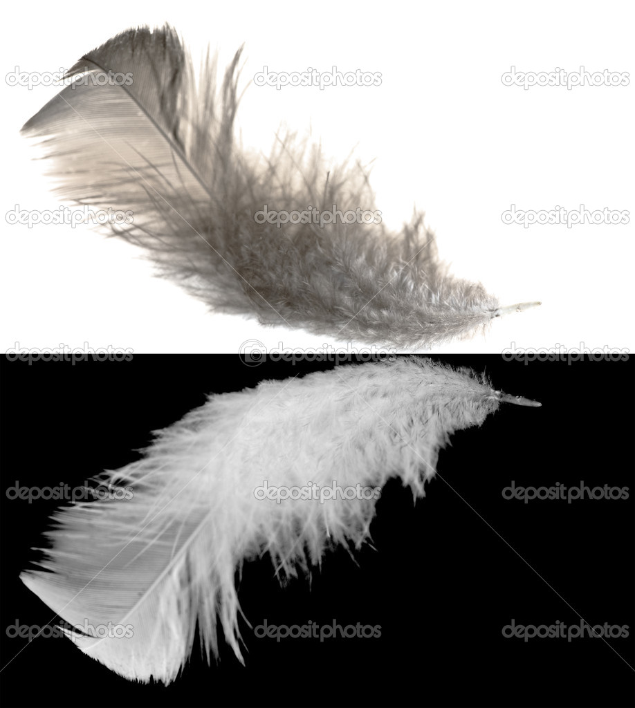 Blak feather isolated on white and white feather isolated on black background — Stock Photo #6260208
