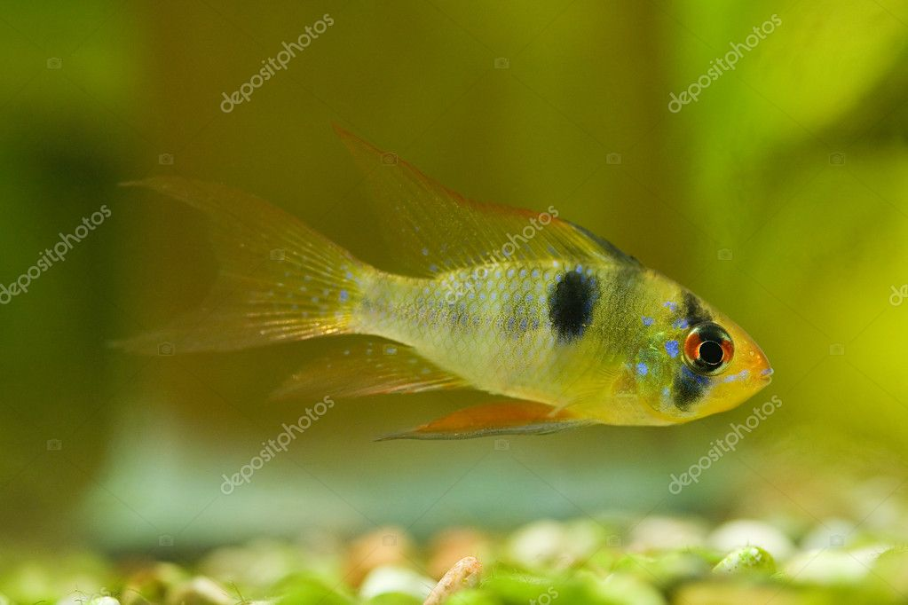 Small fish on green background  Stock Photo #6260219