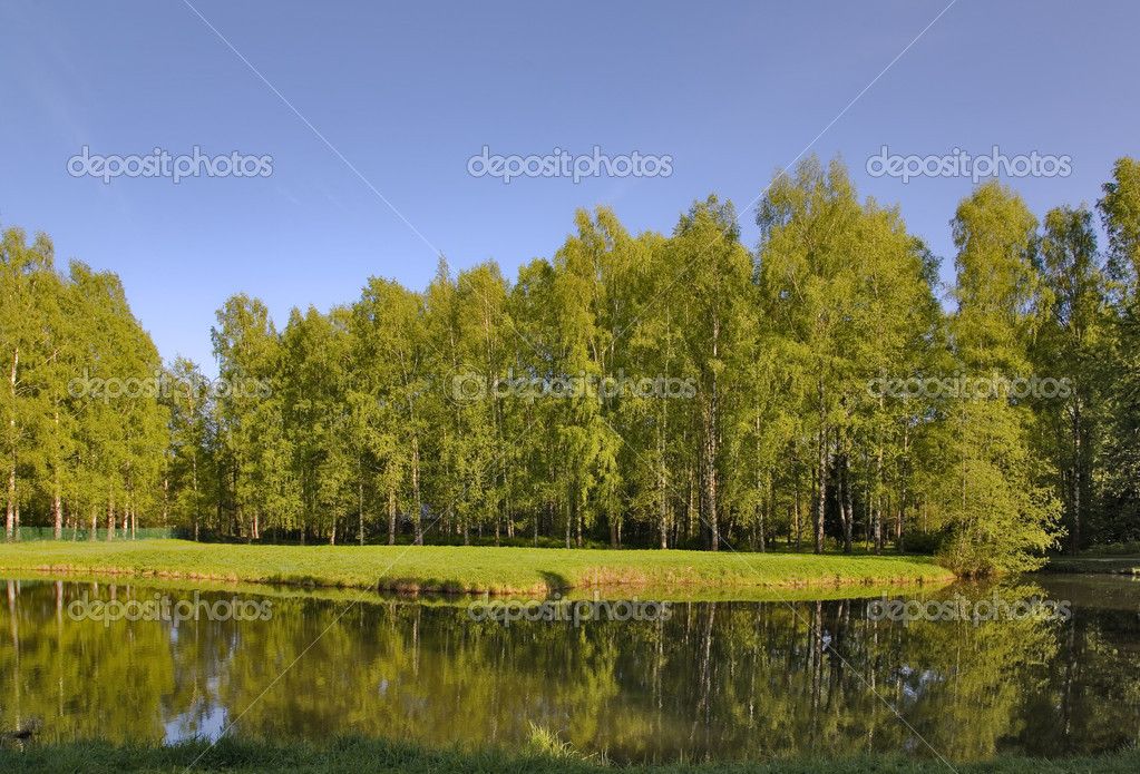 Landscape with birch forest near lake under blue sky — Stock Photo #6260317