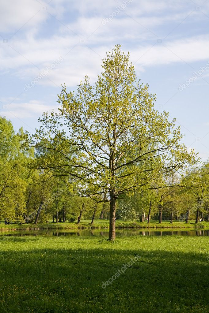 Single tree on meadow under blue sky — Stock Photo #6260466