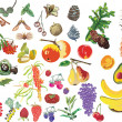 Different fruits large set — Imagens vectoriais em stock