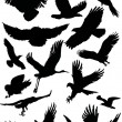 Black flight birds — Stock Vector