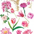 Royalty-Free Stock Vector Image: Pink flowers collection