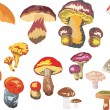 Mushroom collection — Wektor stockowy #6261013