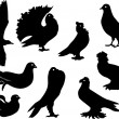Royalty-Free Stock Vector Image: Pigeon silhouettes set