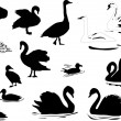 Stock Vector: Different waterfowl silhouettes