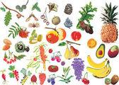 Große anzahl von verschiedenen früchten — Stockvektor