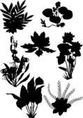 Lily ornamental silhouette — Stock Vector