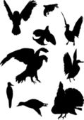 Nine bird silhouettes — Stock Vector
