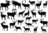 Twenty three deers — Stock Vector