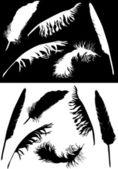 Kolekcja czarno-białych piór — Wektor stockowy