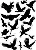 Black flight birds — Stock Vector