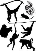 Different monkey silhouettes — Stock Vector