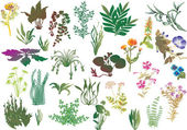 Collection of different plants — Stock Vector