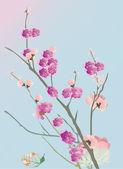Kersenboom bloemen op blauw — Stockvector