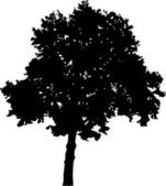 Large broad-leaved tree silhouette — Stock Vector