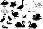 Different waterfowl silhouettes — Stock Vector