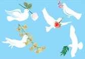White pigeon and flowers — Stock Vector