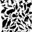 Stock Vector: Fifty seven bird silhouettes