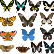 Fourteen color butterflies — Stockvectorbeeld