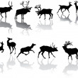 Fourteen deers with reflections — Stock Vector