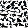 Stock Vector: Fifty four bird silhouettes