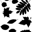 Royalty-Free Stock Vector Image: Leaf silhouette collection