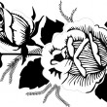 Black roses sketch — Stock Vector #6329073