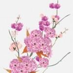 Pink cherry tree flowers on light blue — Stock Vector #6329221