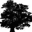 Vector de stock : Oak silhouette