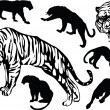 Collection of tigers — Stockvector  #6329351