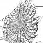Black spider web on white — Stock Vector #6329444