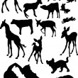 Animal baby silhouettes - Stock Vector