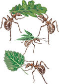 Ants and leaves — Stock Vector