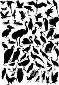 Cincuenta y siete siluetas de aves — Vector de stock