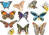 Eleven different butterflies — Stock Vector