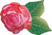 Single red rose illustration — Stock Vector