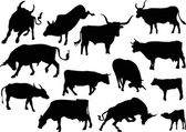 Thirteen cow silhouettes — Stock Vector