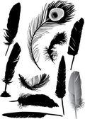 Ten black feathers — Stock Vector