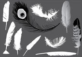 Ten feathers on grey — Stock Vector