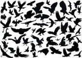 Elli dört kuş silhouettes — Stok Vektör