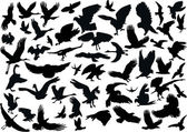 Fifty four bird silhouettes — Vetor de Stock