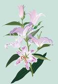 Light lily on blue illustration — Stock Vector
